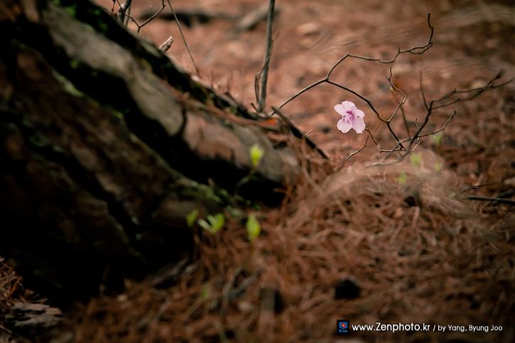 the_flower.jpg