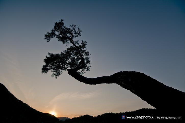 dreaming tree.jpg