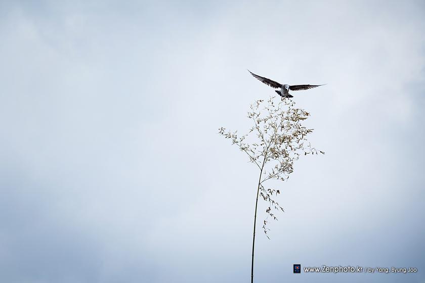bird_and_tree.jpg