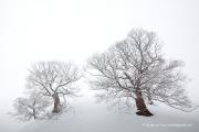 깊어가는 겨울 나무