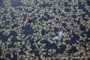 영원에 물드는 나비 한 마리