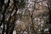 벚꽃 잎 날리는 어느 순간